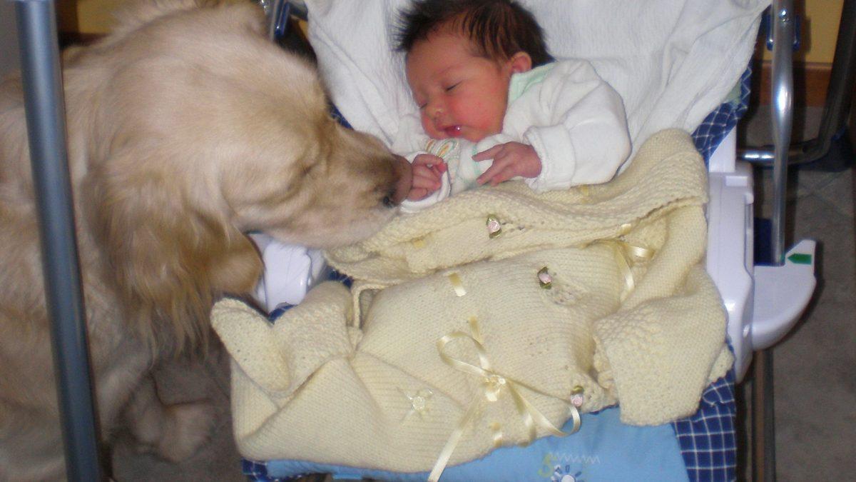 Pillole di conoscenza neonato-cane: cosa fare dopo il parto