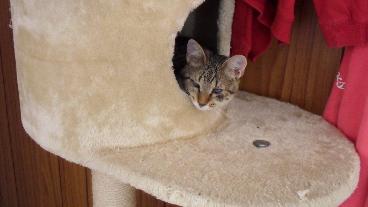 Appartamento a misura di gatto