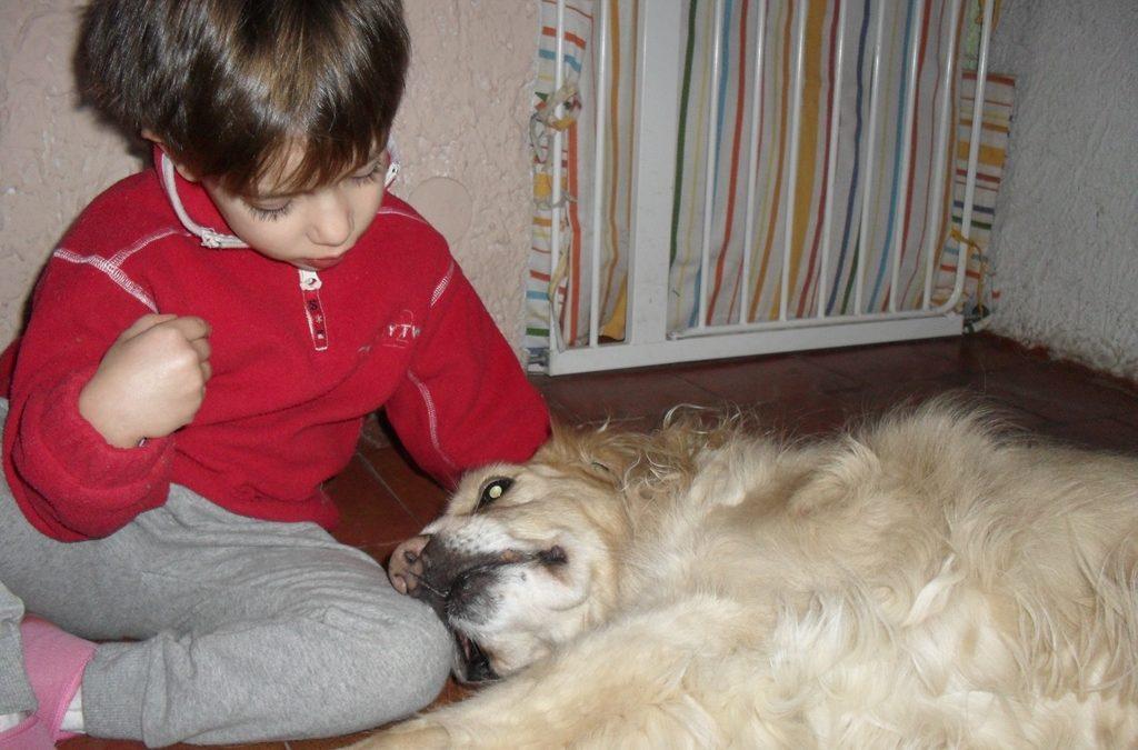Conoscere il proprio corpo con il cane attraverso la relazione