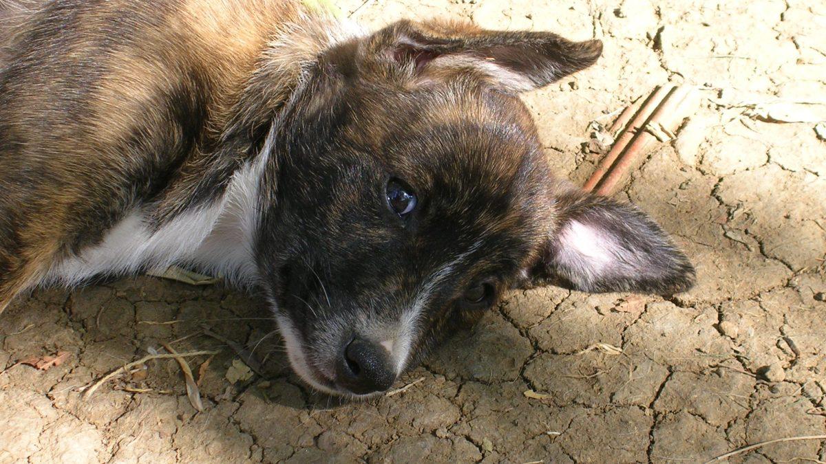 Adottare un cucciolo-consigli per l'adozione responsabile