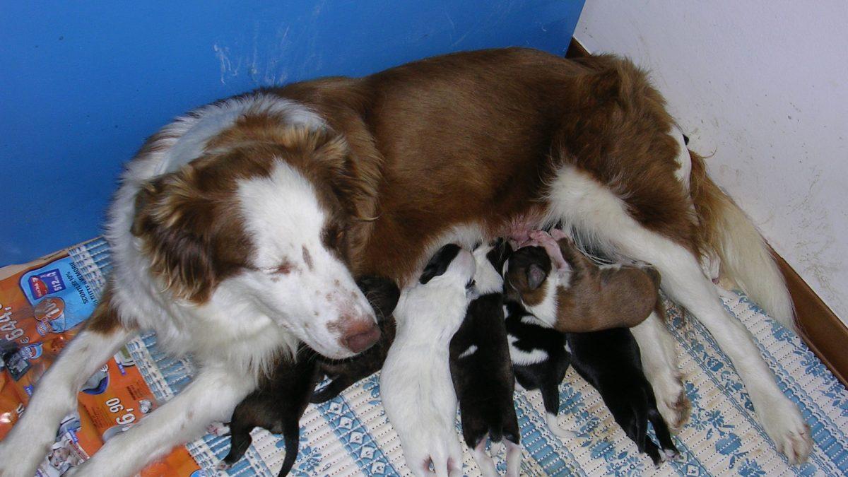 Il legame mamma-cucciolo: un punto di partenza
